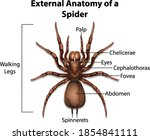 external anatomy of a spider on ... | Shutterstock .eps vector #1854841111