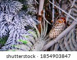 Fir Cone On The Background Of...