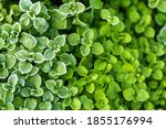 fresh green leaf with ice drops ... | Shutterstock . vector #1855176994