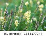 blooming field of wild flowers... | Shutterstock . vector #1855177744