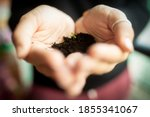 Small photo of Girl's hands with heart shape holds a little bud. Life concept and growth. Extreme close up with shallow depth of field. Growing business concept or nature sensibility