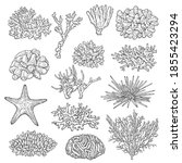 Sea Corals Colonies And...