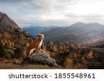 Dog In The Autumn Mountains At...
