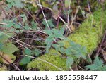 Nettle In Autumn Colors On A...