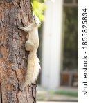 White Cute Squirrel Climbing Up ...
