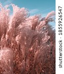 Small photo of Pampas grass with blue sky and clouds. Autumn landscape with dried reeds grass. Natural background, outdoor, sat sail champagne color, boho style. Blue tone. Minimal natural abstract concept.