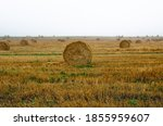 Straw Bales On The Field During ...
