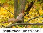 A Fluffy Beautiful Squirrel Is...