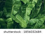 Picture Of Fresh Green Leaves...