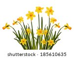 daffodils isolated on a white... | Shutterstock . vector #185610635