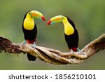 Costa Rica Wildlife. Keel...