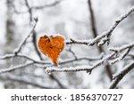 Heart Shaped Yellow Birch Leaf...