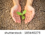hands holding tree growing on... | Shutterstock . vector #185640275