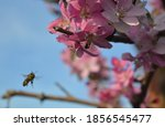 Flying Honey Bee Heading...