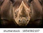 This Bllack Rhino Facing...