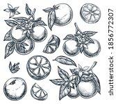 oranges citrus tropical fruits... | Shutterstock .eps vector #1856772307