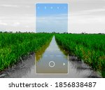 a picture of paddy field and...