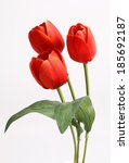 Red Tulip With Leave On A Whit...
