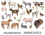 large set of hand drawn farm... | Shutterstock .eps vector #1856924311
