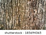 Tree Bark Texture Wallpaper