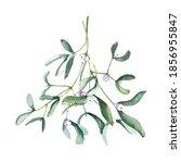Watercolor Mistletoe Branch...