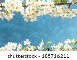 spring frame with pear blossom   Shutterstock . vector #185716211
