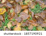 Yellow Brown Fallen Leaves And...