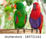 a pair of solomon island... | Shutterstock . vector #185721161