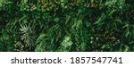 Abstract Green Leaf Texture ...