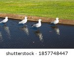 Some Beautiful Seagulls...