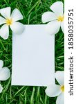 Small photo of Empty white card on green grass with Frangipani flowers, mock greeting card, summer sale banner, categorically.