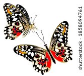isolated clipart  butterflies...   Shutterstock .eps vector #1858094761