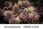 Lilac Thistle Flower Background....