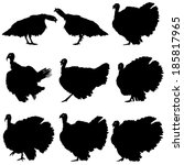 silhouettes of turkeys. vector...