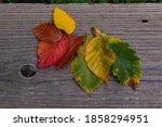 Leaves On Wood  Colorful Leaves ...