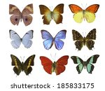 butterfly on white | Shutterstock . vector #185833175