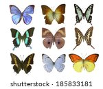 butterfly on white | Shutterstock . vector #185833181