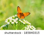 The Beautiful Butterfly Sits O...