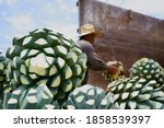 Agave Tequila Jalisco  The...