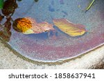 Autumn Leaves Under Water In A...