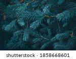 Fir Tree Natural Moody Textured ...