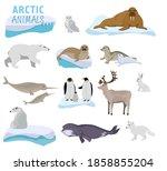 Arctic Creature Cartoon On Blue ...