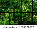 Window View Of A Verdant Summer ...