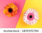 Pink Gerbera On A Yellow...