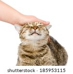Stock photo female hand patting a happy cat isolated on white background 185953115
