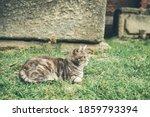 Homeless Cute Cat Lies On The...