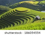 Beautiful Rice Terrace In Mu...