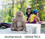 Monkey Sitting On The Stone...