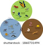 infographics with insects and...   Shutterstock .eps vector #1860731494