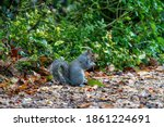 Cute Little Squirrel On Its...